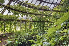 Loppies-Greenhouse-3
