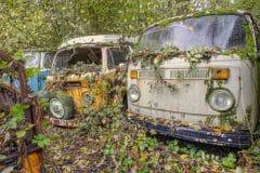 Loppies-Volkswagen_Forest-4