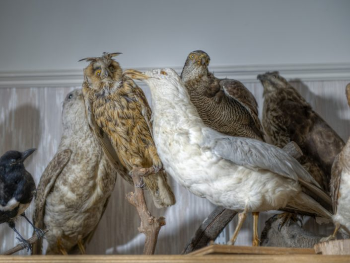 Ferme Taxidermist (FR)